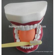 Modèle de soins dentaires médicaux de style nouveau, soins dentaires dentaires