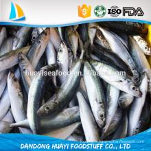 Bonne qualité de l'anchois entièrement congelé pour votre choix