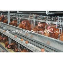 4-5 Tiers H Rahmenschicht Hühnchenkäfig (Euro Standard)