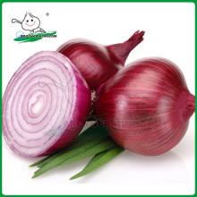 Chinese onion/China red onion/Fresh red onion
