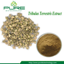 Hot Sale Tribulus Fruit Extract Powder Berkualitas Tinggi