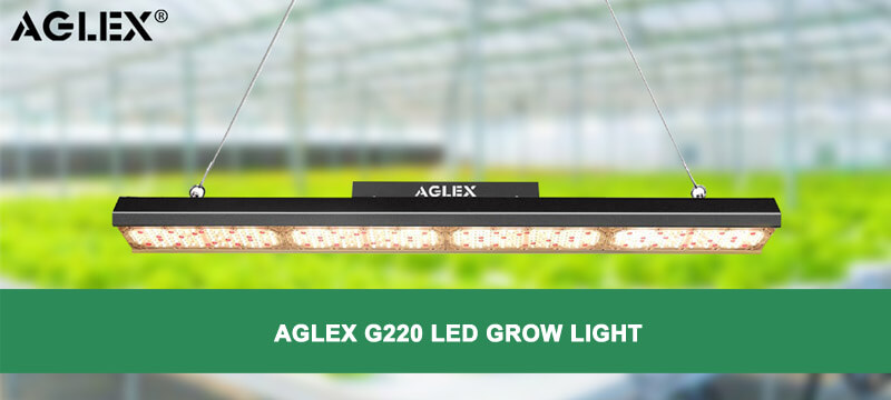 G220w led grow light
