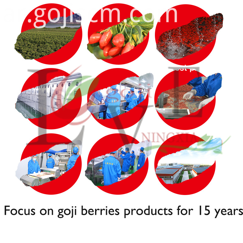 Attentive Picked Goji production process