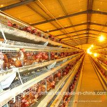 Equipamento de exploração agrícola automático da galinha da camada com certificação do GV