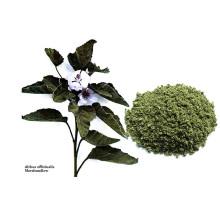 Сырой табачный лист зефир сухой лист бесплатно