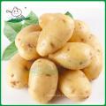Mercado de patatas frescas / Patata fresca / Patata de Holanda