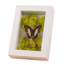 Wholesale Display Dried Flowers Plant Specimen Bouquet Trinket on Wall or Tabletop Wooden Frame Box