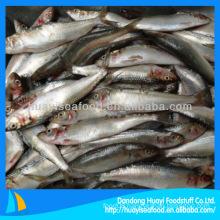 frozen sardine process
