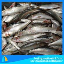 Processo de sardinha congelada