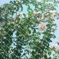 Black Green Anti Bird Net