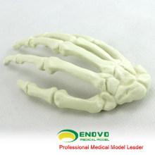 GROSSHANDEL SIMULATION KNOCHEN 12324 Medizinische Künstliche Hand Knochenmodell, Orthopädie Praxis Simulation Knochen