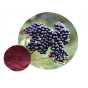 Meilleur Maqui Berry Fruit Powder