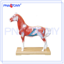 PNT-AM42 hot sale horse Acupuncture Model animal anatomy model