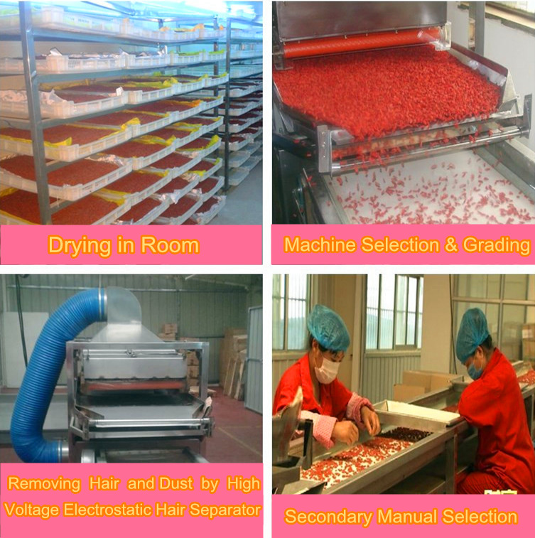 Goji berry Process