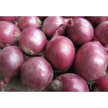 2015 New Crop Frozen Red Onion