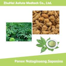 Hochwertige natürliche Panax Notoginseng Saponine