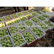Venda quente, Shandong Pear de origem