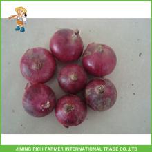 Fresh Season Onion Fresh Onion Shallot