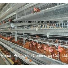 Automatisches Schicht-Hühnchen-Käfig-System (H-Rahmen)