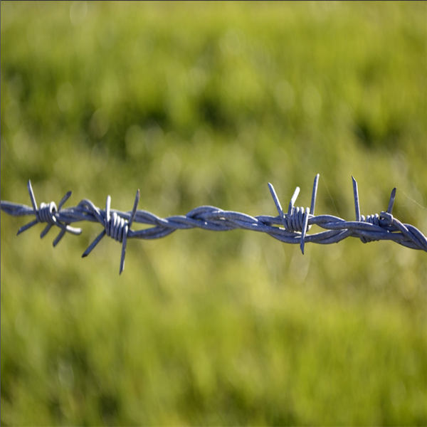 High Quality Single Barbed Wire