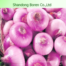 Fresh Delicious Vegetable Onion From Boren