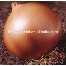 MON03 Huang 96 días semillas de cebolla amarilla global para las ventas