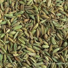 25kgs / 50kgs PP Bags China Sementes de erva-doce best-seller