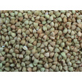 Chinese Buckwheat Kernels Yulin Origin (BW-007)