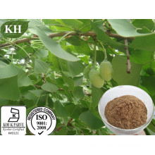 100% Natural Ginkgo Biloba Extract with Factory Price