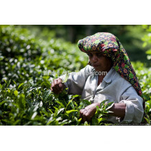 Machinery Factory Preço Máquina de classificação de cor de chá Máquina de classificação de cor de chá branco feita na China com câmera CCD