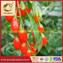 High Quality Gojiberry From Ningxia, China