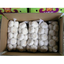 High Quality 5.0cm and up Pure White Garlic