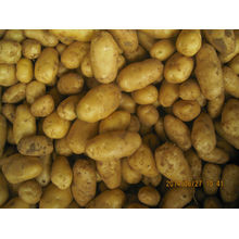 china fresh potato 2014