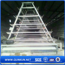15 Years Life Span Chicken or Birds Cage with Factory Price