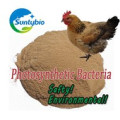 Probiotics Bulk Photosynthetic Bacteria for Water Purifier