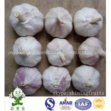 Red Garlic (Normal White Garlic Packing in 10kgs Cartons