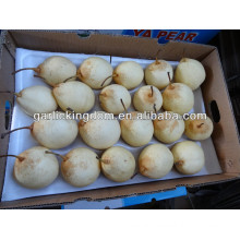 new crop Ya Pear from fty low price