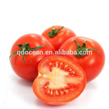 Hot selling high quality tomatoes in china fresh tomato packaging with reasonable price
