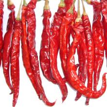 Nouvelle culture Bonne qualité séchée piment rouge chaud