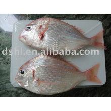 pescado rojo