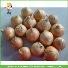 Onion From Shandong Fresh Small Onions