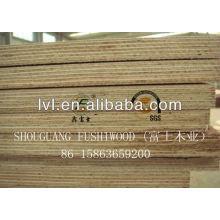 Chinese Eucalyptus plywood