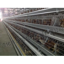 Full Automatic Layer Cage Zertifikat von ISO9001