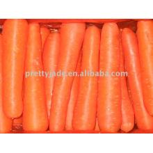 Zanahoria preminum china para la exportación