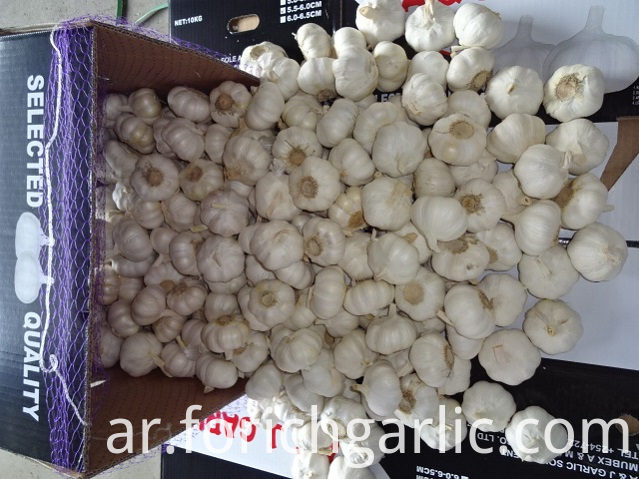 How To Store Garlic Fresh