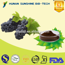 20% 30% polyphenol grape seed extract/grape skin extract for red wine