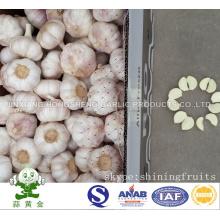 High Quality 6.0cm Normal White Garlic 10kgs Carton