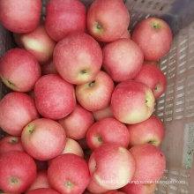 Nova colheita doce vermelho fresco Gala Apple