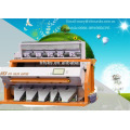 Popular,best quality and service,twelve years experience,frozen food color sorter with 2048 pixel camera