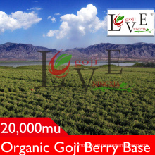 High Standard Goji Berry/Non GMO Goji Berry